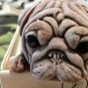 Ôm bụng cười với phản ứng của chó cưng khi thấy chiếc bánh hình em cún bị cắt từng miếng