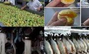 """CẢNH BÁO: 10 thực phẩm """"made in China"""" được các chuyên gia Mỹ khuyến cáo nên tránh xa ngay tức khắc!"""