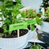 """Hướng dẫn cách trồng cây bạc hà: Vừa """"làm duyên"""" cho tổ ấm vừa bảo vệ sức khỏe cả nhà"""