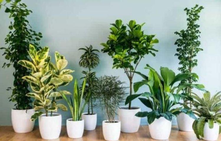 17 loại cây xanh trong nhà giúp thanh lọc không khí