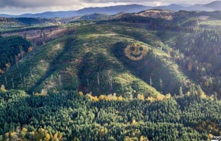 Mỹ tạo hình mặt cười khổng lồ từ cây xanh trên sườn đồi