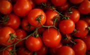 Nhật Bản bán cà chua chỉnh sửa gen giúp giảm căng thẳng