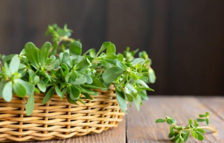 Phát hiện thêm một loại rau trường thọ thế giới tôn sùng mọc đầy ở Việt Nam